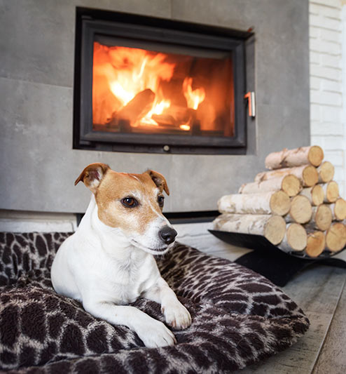 Living room with fireplace and dog sitting near by as a reminder of a Carbon monoxide threat